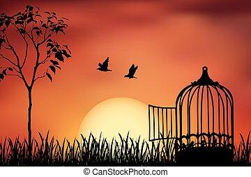 libéré, coucher soleil