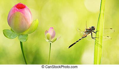 libel, op, water, afsluiten, bloemen, lelie