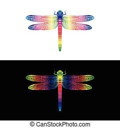 libellula, colorito, insetto, vettore, disegno, fondo, animal., bianco, nero