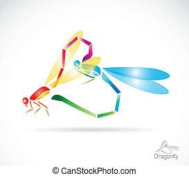 libellula, due, colorito, breeding.
