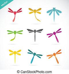 libellula, vettore, gruppo, colorito