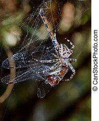 libellule, araignés, victime