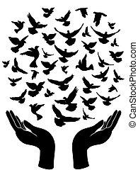 liberar, paloma, paz, manos