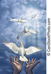 liberar, palomas