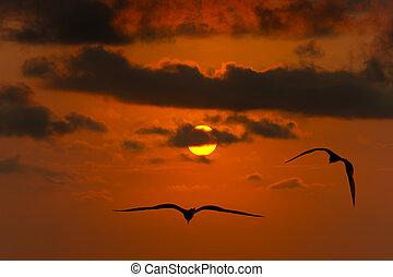 liberdade, voando, silueta, pássaros, esperança