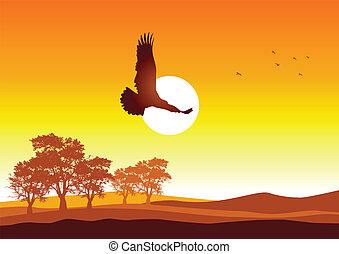 liberté, ciel
