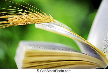 libro abierto, trigo, pincho