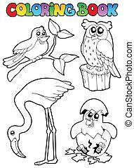 libro colorante, con, uccelli