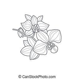 libro colorante, fiore, monocromatico, disegno, orchidea