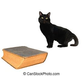 libro, viejo, gato
