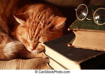 libros, gato