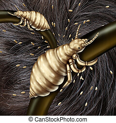 Lice In Hair - Lice in hair problem as a medical concept...