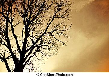 licencia, árbol, sin, silueta, muerto