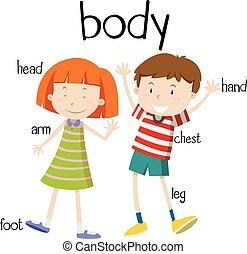 lichaam, diagram, onderdelen, menselijk