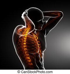 lichaam, mannelijke , ruggengraat, scanderen