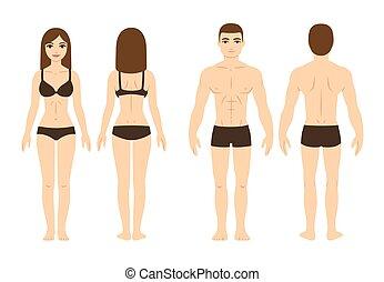 lichaam, mannelijke , vrouwlijk