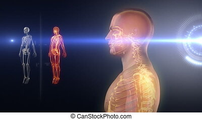 lichaam, medisch, menselijk, rontgen, scanderen