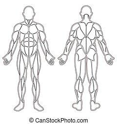 lichaam, spierballen, silhouette, menselijk