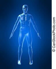 lichaam, vorm, menselijk