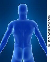 lichaam, vorm