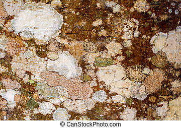 Lichen and moss on wood background