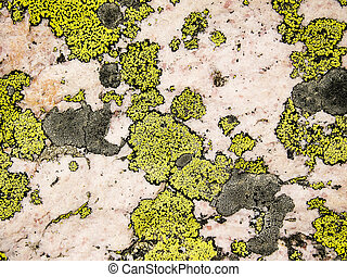 Lichen And Rose Quartz Abstract - A nature abstract of...