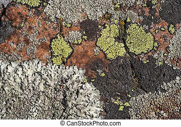 Lichen closeup