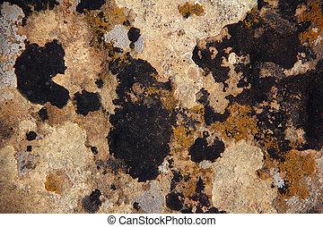 Lichen Mesa Verde