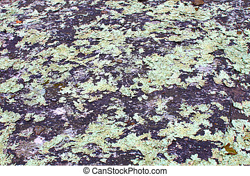 Lichen on rock background