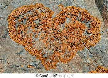 Lichen on stone 1