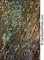Lichen on the tree bark