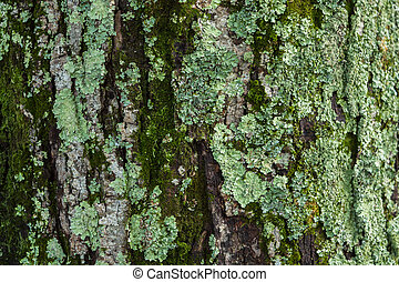 Lichen on the trunk of a tree