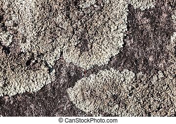 lichen, rocher