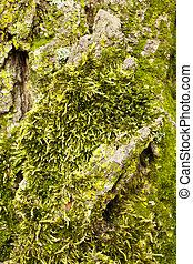 Lichen - Photo of Lichen on a tree