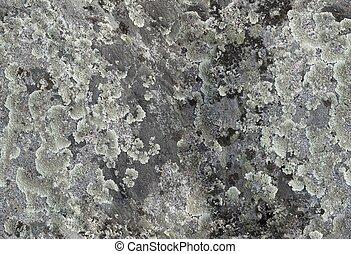 Lichen - Surfase covered of a lichen