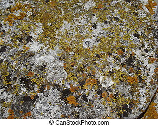 LICHEN THE OLD WALL