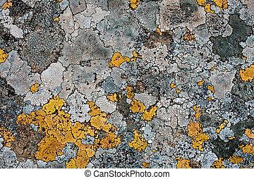 lichens as background