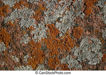 Lichens - Various lichens form abstract patterns on granite...