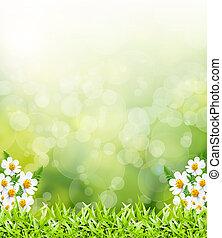 licht, bokeh, grüner abriß, hintergrund
