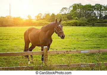 licht, paarde, morgen