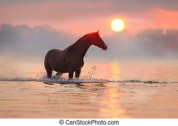 licht, paarde, ondergaande zon