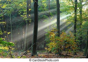 lichtstrahlen, gießen, durch, der, bäume