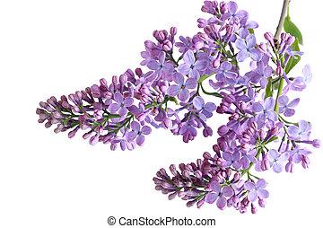 liclac, flores