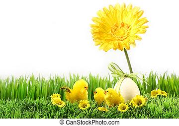 liden, chicks, græsset