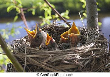 liden, fugle, 4, børn