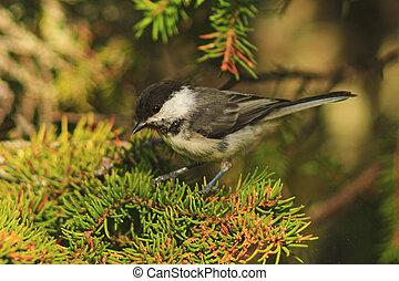 liden, træ, fugl, branch