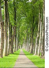 liden, vej, igennem, række, i, træer