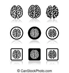 lidská bytost mozeček, ikona, dát, -, intelligenc