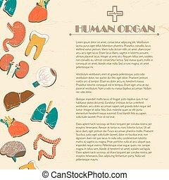 lidský, vnitřní orgány, grafické pozadí