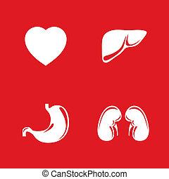 lidský, vnitřní orgány, vektor, ikona, set.